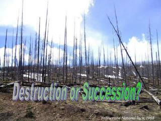 Destruction or Succession?