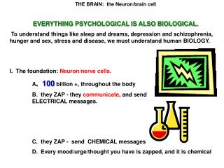 THE BRAIN:  the Neuron/brain cell EVERYTHING PSYCHOLOGICAL IS ALSO BIOLOGICAL.