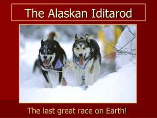 The Alaskan Iditarod