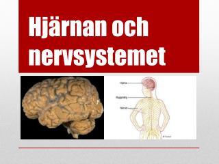 Hj�rnan och  nervsystemet