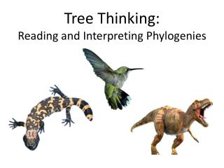 Tree Thinking: Reading and Interpreting Phylogenies