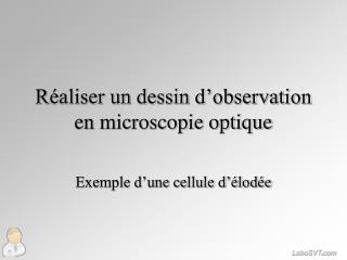 R�aliser un dessin d�observation en microscopie optique