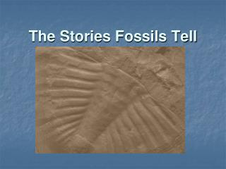 The Stories Fossils Tell