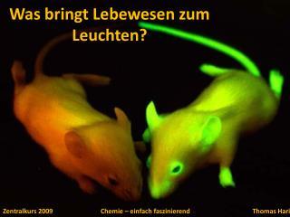 Was bringt Lebewesen zum Leuchten?