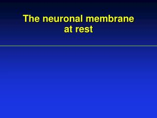 The neuronal membrane  at rest