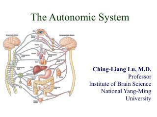 The Autonomic System