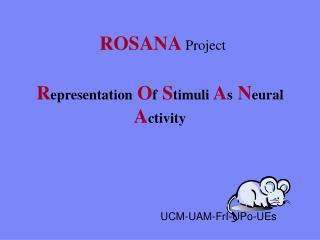 R epresentation O f S timuli A s N eural A ctivity