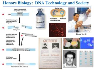 Honors Biology:  DNA Technology and Society