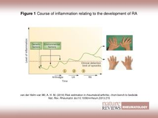 Figure 1  Course of inflammation relating to the development of RA