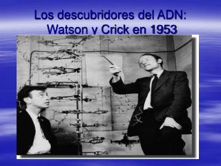 Los descubridores del ADN:  Watson y Crick en 1953