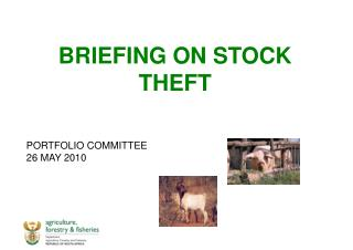 BRIEFING ON STOCK THEFT