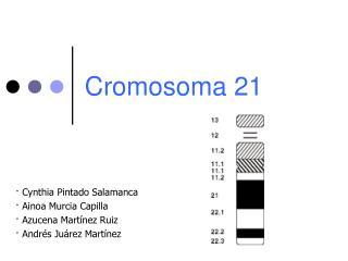 Cromosoma 21