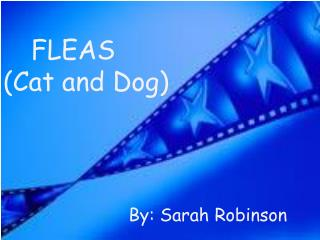 FLEAS (Cat and Dog)