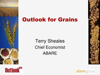 Outlook for Grains