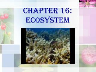 Chapter 16: ECOSYSTEM