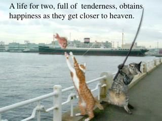 A life for two, full of  tenderness, obtains happiness as they get closer to heaven.