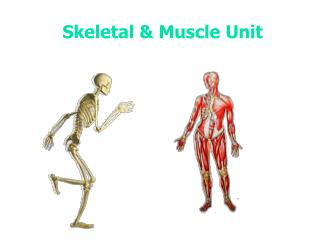 Skeletal & Muscle Unit