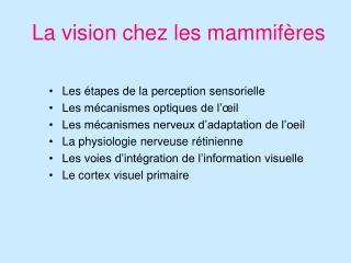 La vision chez les mammifères