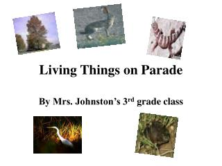 Living Things on Parade