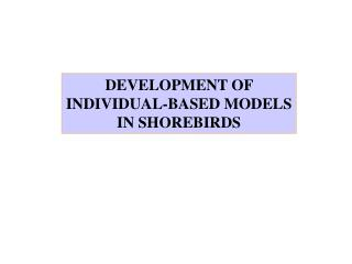 DEVELOPMENT OF INDIVIDUAL-BASED MODELS IN SHOREBIRDS