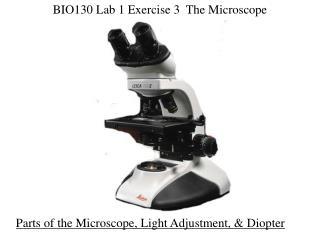 BIO130 Lab 1 Exercise 3  The Microscope