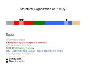 Caption N-terminal domain A/B  domain :  ligand-independent domain AF1:  Activation F unction  1
