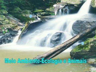 Meio Ambiente-Ecologia e Animais