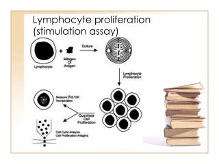 Lymphocyte proliferation (stimulation assay)