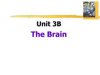 Unit 3B The Brain
