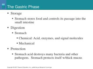 The Gastric Phase