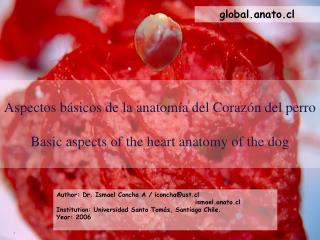 Aspectos b sicos de la anatom a del Coraz n del perro    Basic aspects of the heart anatomy of the dog