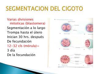 SEGMENTACION DEL CIGOTO