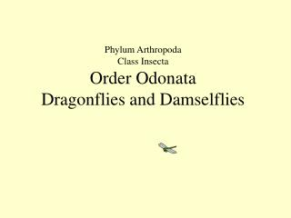 Phylum Arthropoda Class Insecta Order Odonata Dragonflies and Damselflies