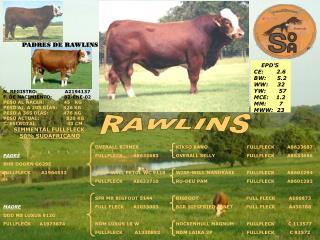 PADRES DE RAWLINS