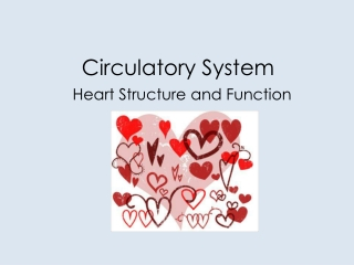 Heart structure, function, and blood pressures