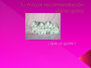Tu mayor recomendación sobre gatos