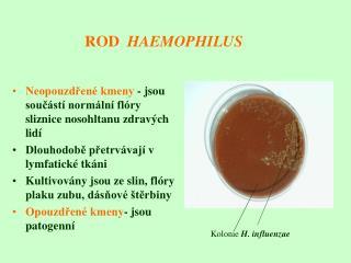 ROD   HAEMOPHILUS