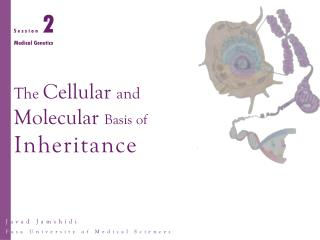 The  Cellular  and Molecular  Basis of Inheritance
