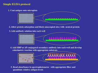 Simple ELISA protocol