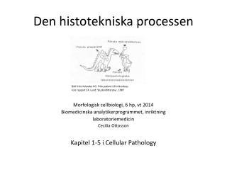 Den  histotekniska  processen