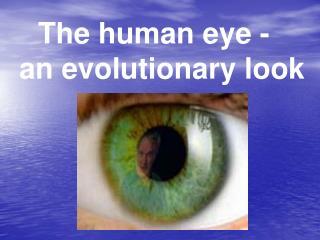 The human eye -   an evolutionary look