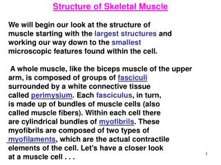 Structure of Skeletal Muscle    We will begin our look at the structure of
