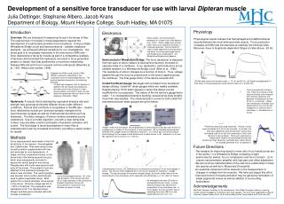 Development of a sensitive force transducer for use with larval  Dipteran  muscle