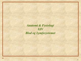 Anatomi & Fysiologi XIV Blod og Lymfesystemet
