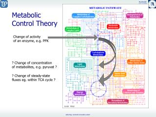 Metabolic  Control Theory