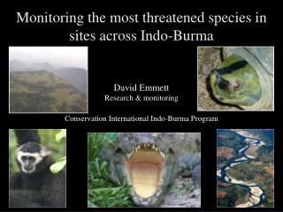 Monitoring the most threatened species in sites across Indo-Burma