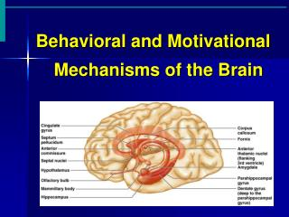 Behavioral and Motivational Mechanisms of the Brain