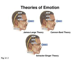 Three Theories Of Emotion Pictures to Pin on Pinterest ...
