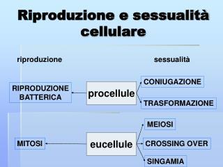 Riproduzione e sessualità cellulare