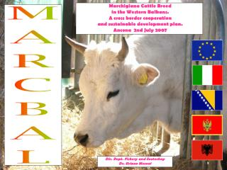Marchigiana Cattle Breed  in the Western Balkans.  A cross border cooperation